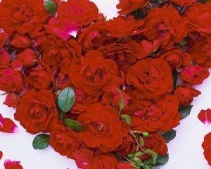 Ricetta petali di rose al forno