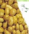 Ricetta patate novelle con panna acida