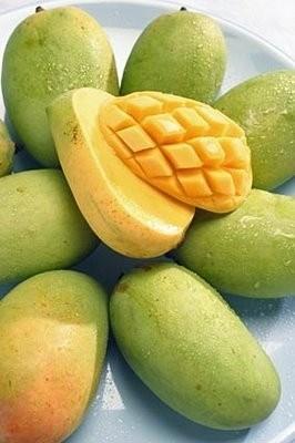 Ricetta caprese al mango