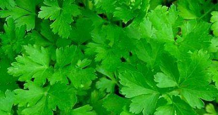 Ricetta salsa verde calda per carni