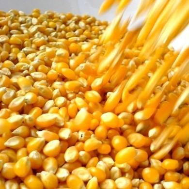 Ricetta frittatine di mais