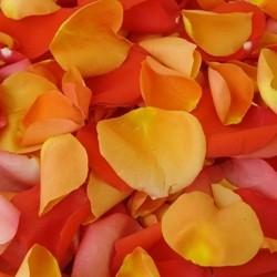 Ricetta quaglie alle rose