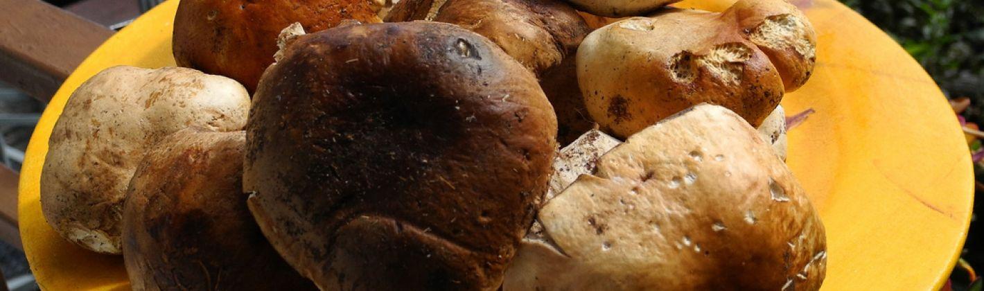 Ricetta funghi porcini al dragoncello