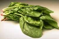Ricetta fusilli con pesto di spinaci
