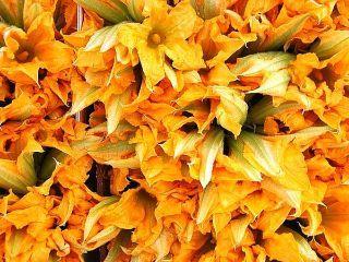 Ricetta frittelle di fiori di zucca