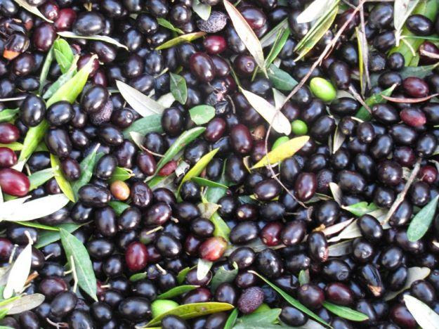Ricetta olive nere sottolio