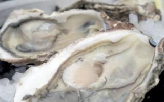 Ricetta blue oyster cult