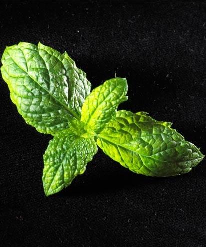 Ricetta sgroppino al limone e menta
