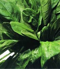 Ricetta gnocchetti di spinaci