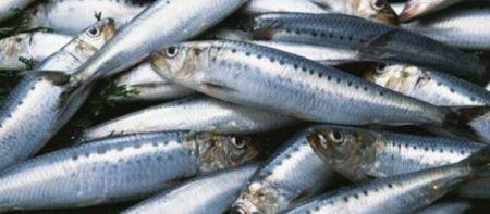 Ricetta carpaccio di sardine