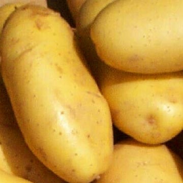 Ricetta sformatini di patate